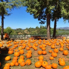 Boa Vista Orchards in Apple Hill